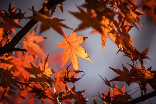 autumn-leaves-1415541_1920 (1)