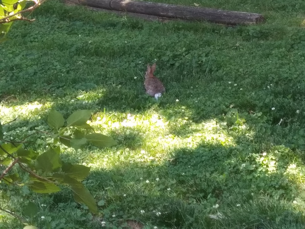 There's the bunny! Relaxing in the shade...