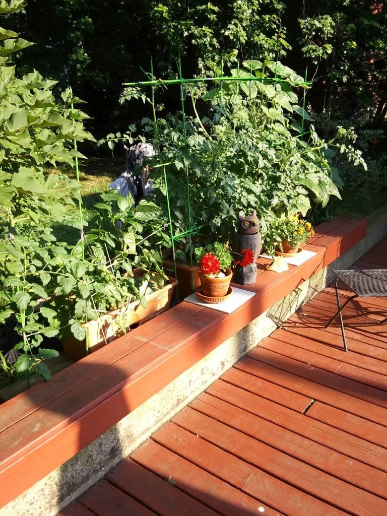 Nonny's Garden this morning (June 19) - Image 1
