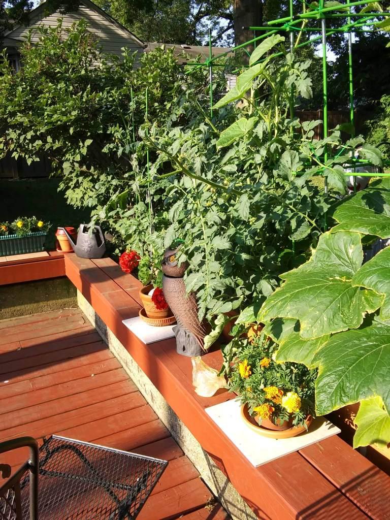 Nonny's Garden this morning (June 19) - Image 2