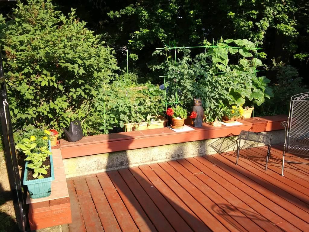 Nonny's Garden this morning (June 19) - Image 3